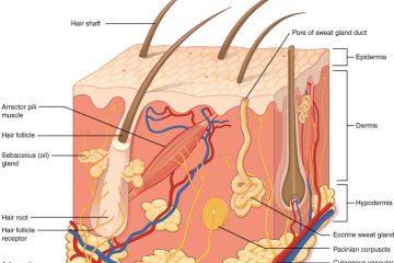 folículo de pelo