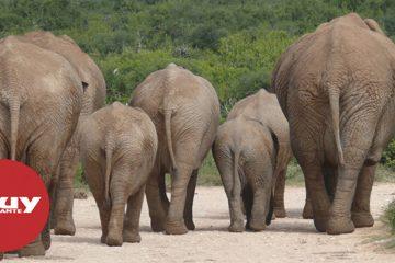 """Los quince elefantes """"borrachos"""" prosiguen de excursión por China"""