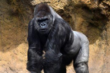 Los animales más poderosos del planeta